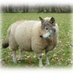 wolf-in-disguise1-250x218.jpg